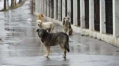 Stray_Dogs_in_Bucharest