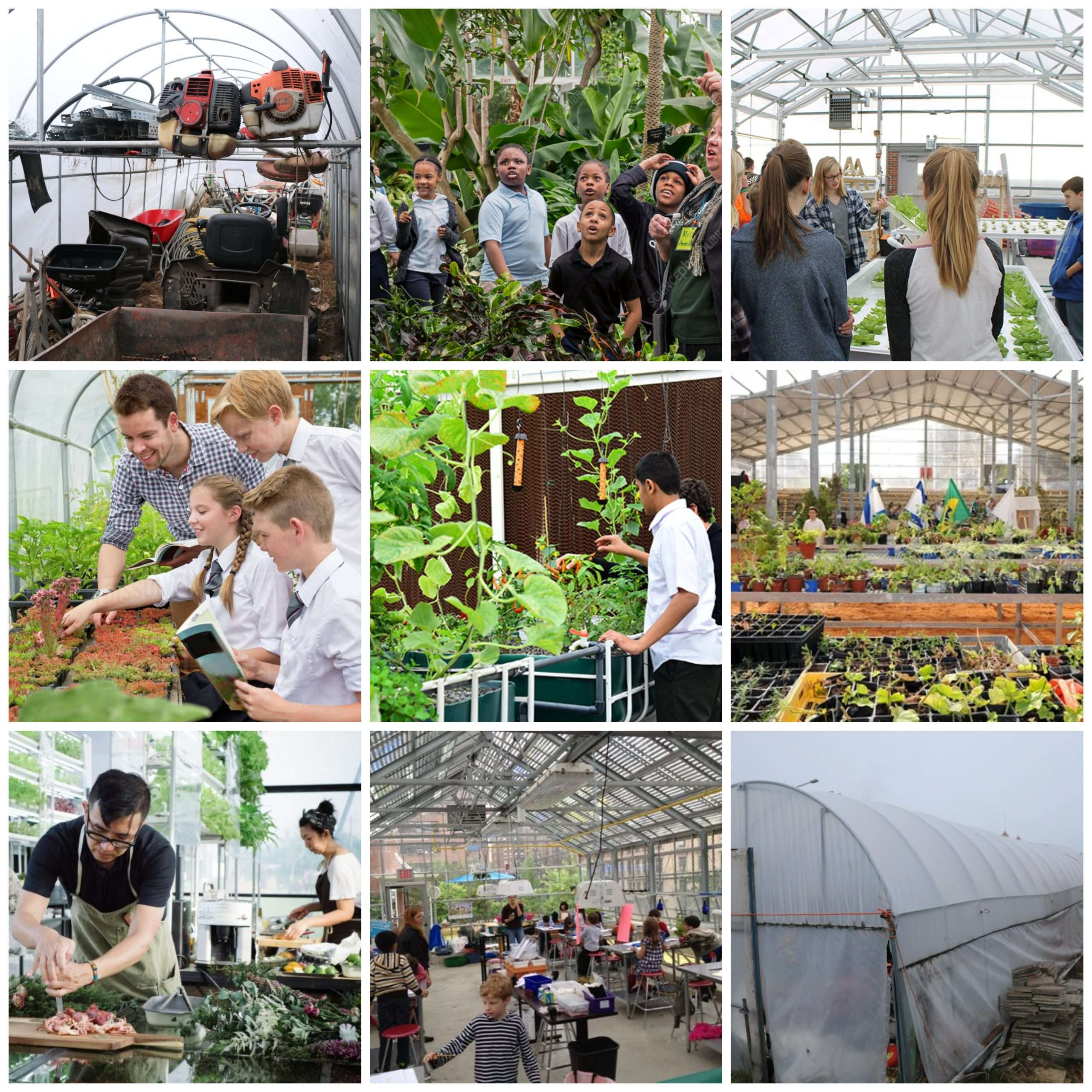 Our greenhouse needs to be revamped. Here's how to help